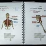 Anatómia do vrecka (otvorená)